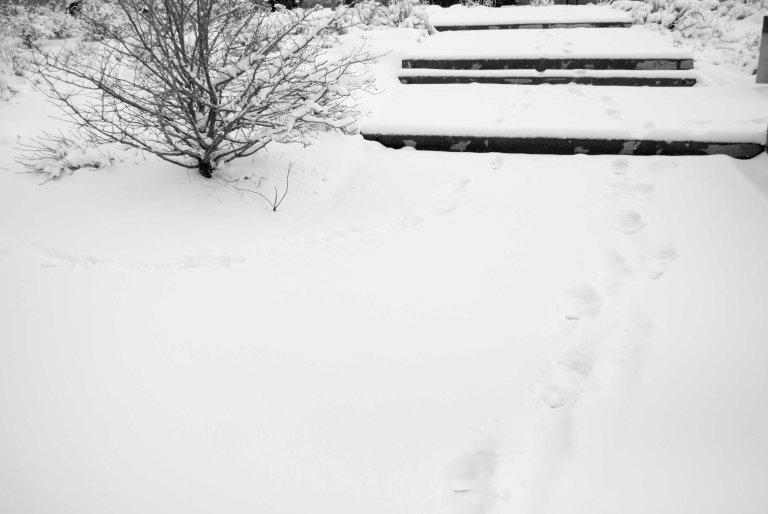 nieve-10