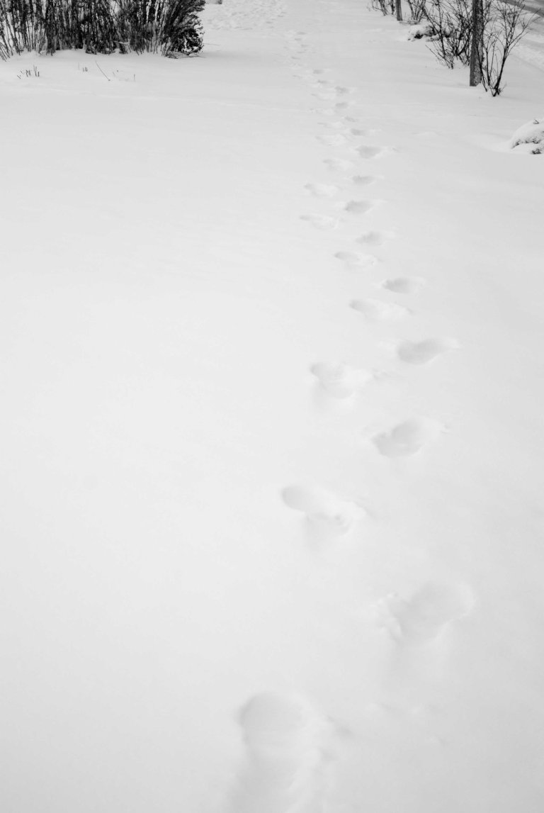 nieve-12