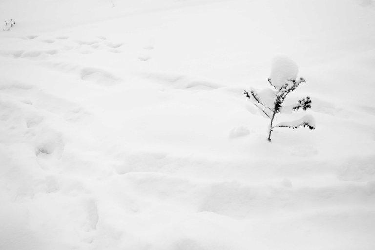 nieve-13