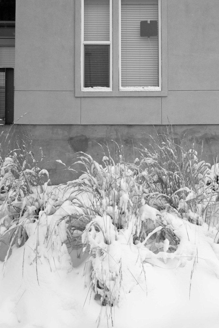 nieve-19