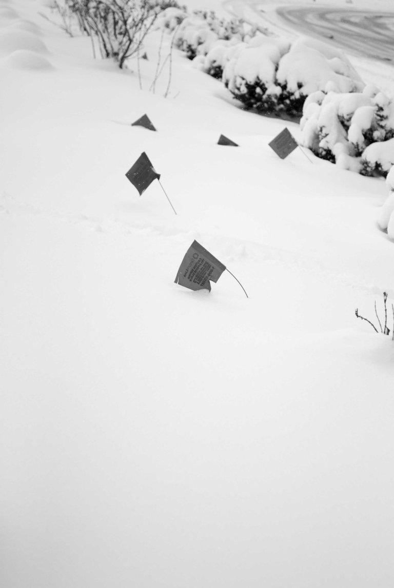 nieve-8